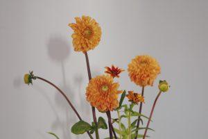 12月生まれのラッキーアイテム:インテリアに黄色い花をプラス