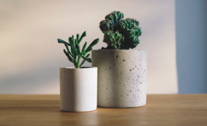 6月生まれのラッキーアイテム:緑の観葉植物